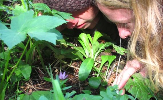 Garden nymphs. / Duendes del jardin